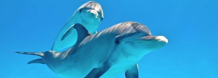 7_datos_que_no_conocias_de_delfines__-_Delphinus.png