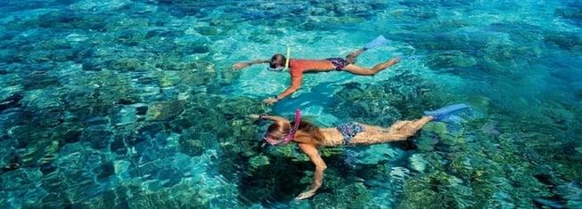 actividades-acuaticas-nado-con-delfines-cancun.png