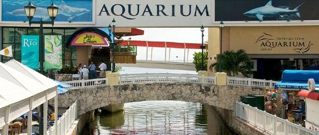 acuario-interactivo-cancun-nado-con-delfines.jpg