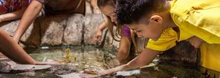 acuario-interactivo-cancun-nado-con-delfines.png