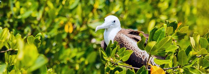 aves-migratorias-delphinus.png
