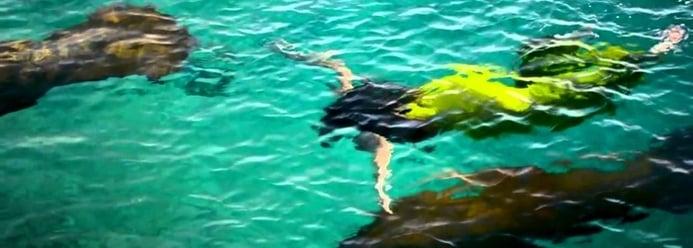 ecoturismo-en-el-caribe.png