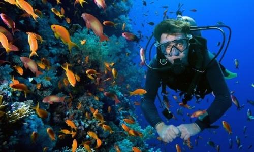 nado-con-delfines-en-puerto-morelos-buceo