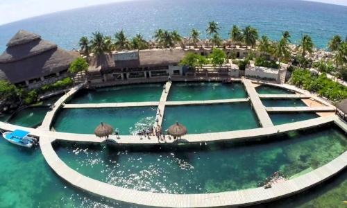 nado-con-delfines-en-puerto-morelos