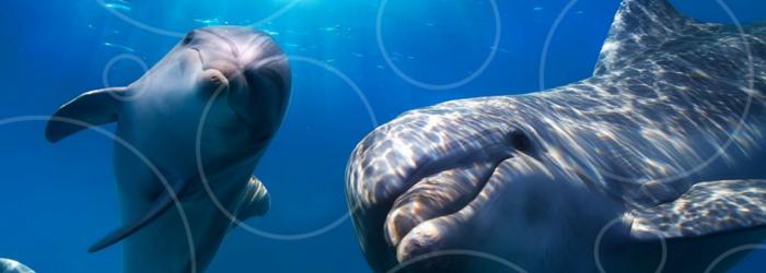 delphinus-delfines-felices