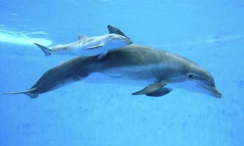 delphinus-maternidad-reproduccion.jpeg