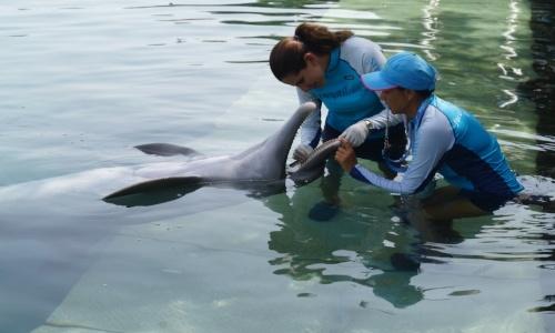 delphinus_veterinaria