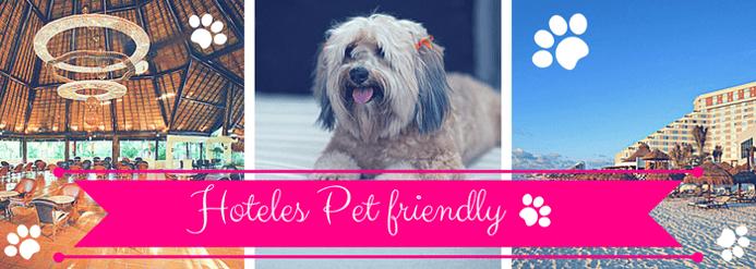 Hoteles-pet-friendly.png