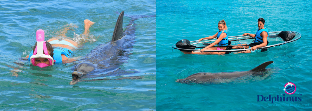 Delphinus Puerto Morelos Nature Connection
