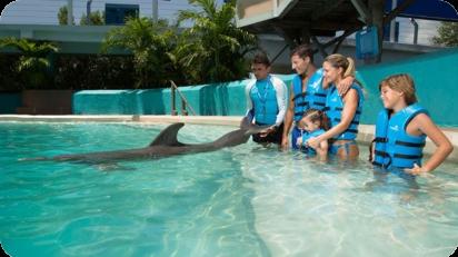 Delphinus Splash
