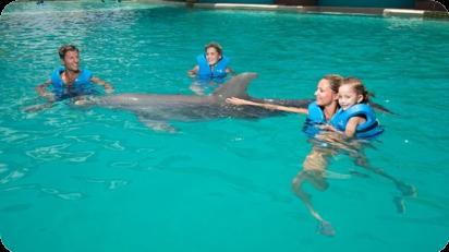 Delphinus nado con delfines libre