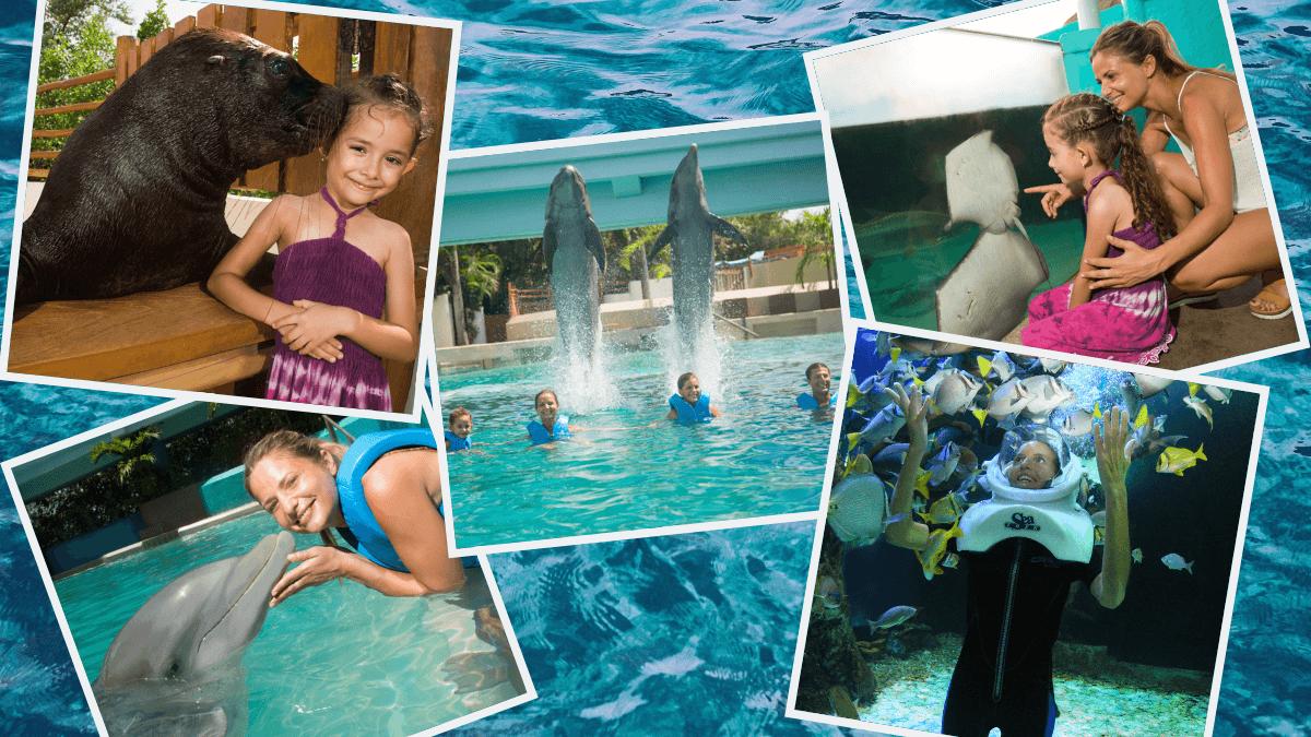 Delphinus-acuario-nadar-con-delfines-en-cancun