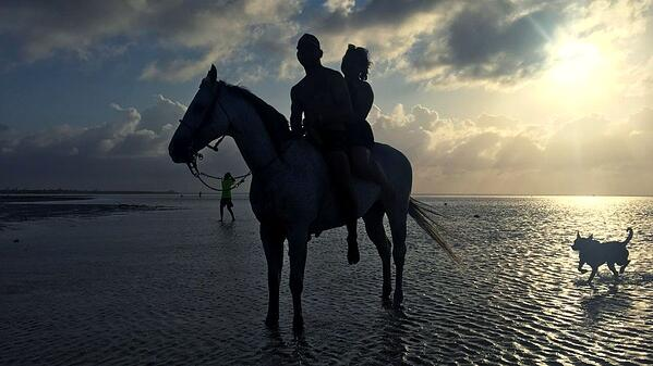 Delphinus playas publicas Cancun Isla Blanca