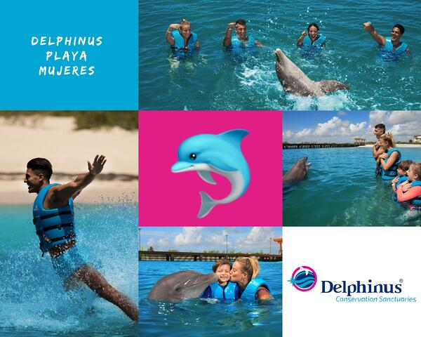 Collage Delphinus Playa Mujeres