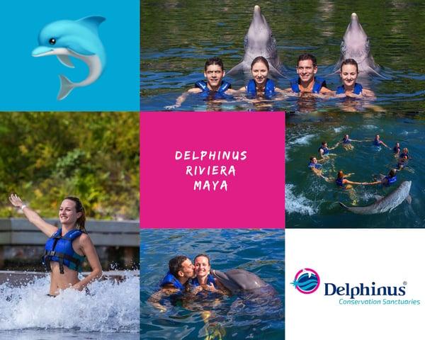 Collage Delphinus Playa del Carmen