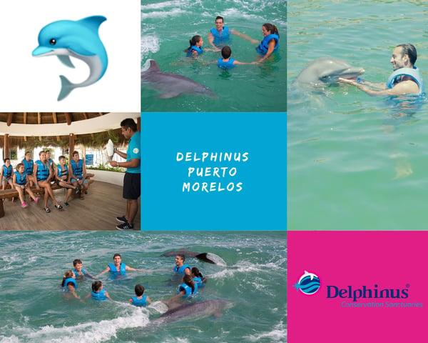 Collage Delphinus Puerto Morelos