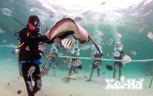 Delphinus-nado-con-delfines-Xel-ha-acuario
