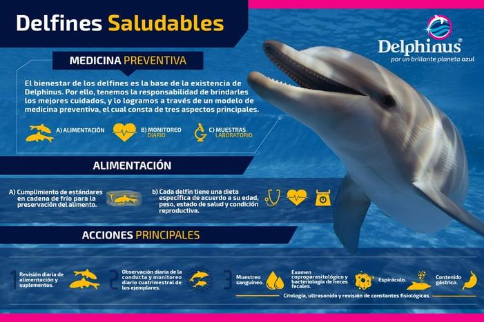Infografia_Nadar_con_delfines_sanos.jpg