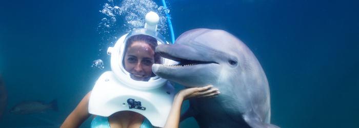 como_elegir_el_nado_con_delfines_ideal_-_Delphinus.png