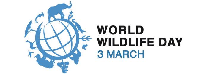 dia-mundial-vida-silvestre-delphinus (1).png