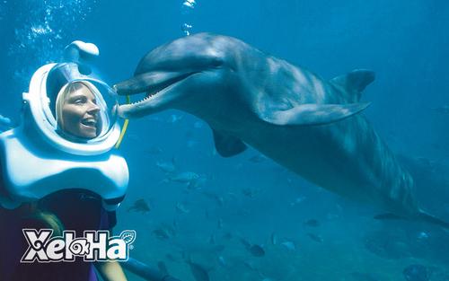dolphin-trek-sea-trek-nado-con-delfines-en-cancun.png