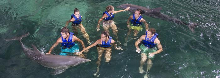 fin-de-semana-cancun-nado-con-delfines (1).png