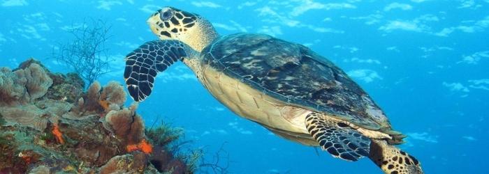 las-playas-mas-hermosas-mexico-delphinus.png