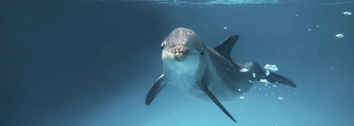 nado-con-delfines-en-cancun-todo-incluido.png