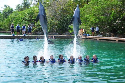 nado-con-delfines-en-cancun.png
