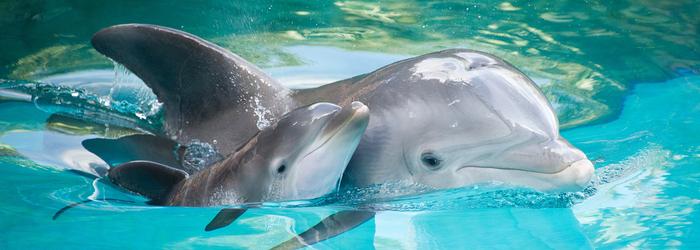 nado_con_delfines_-_Delphinus.png