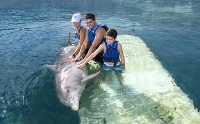 nado_con_delfines_-_que_hacer_en_cancun_-_Delphinus.png