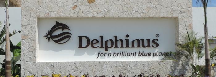 nado_con_delfines_-_trabajar_en_Delphinus.png