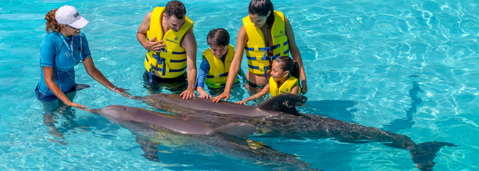 nado_con_delfines_y_todo_lo_que_tienes_que_saber_-_Delphinus.png