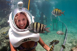 sea-trek-nado-con-delfines-delphinus.png