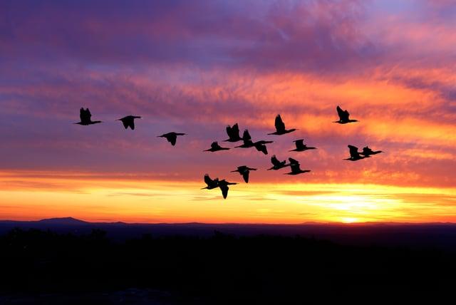 aves-migratorias-isla-contoy.jpg