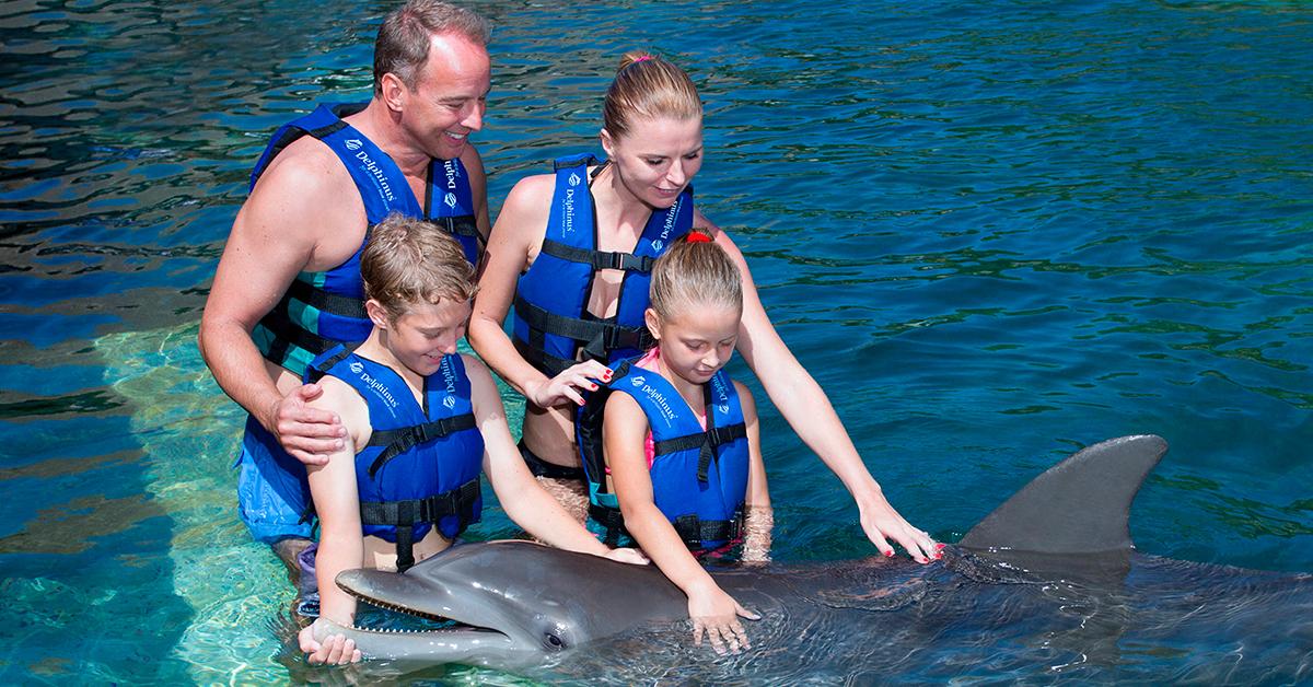 Nadar con delfines en México con perspectiva de bienestar animal