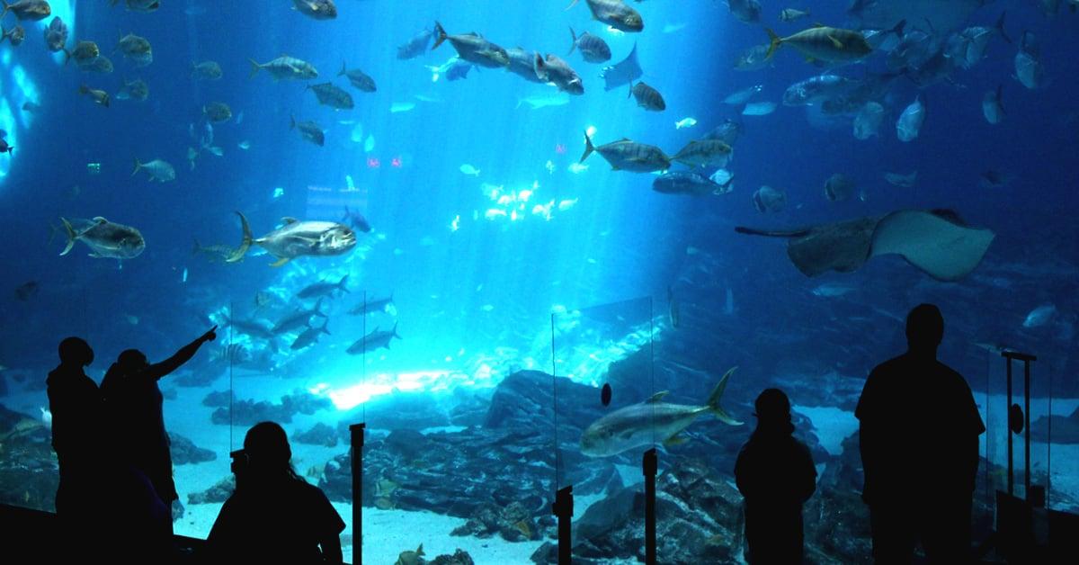 mejores acuarios de mexico nado con delfines Cancún