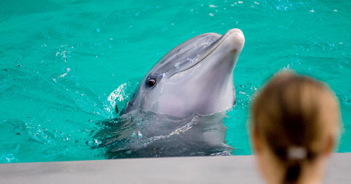 cuanto cuesta nadar con delfines en cancun