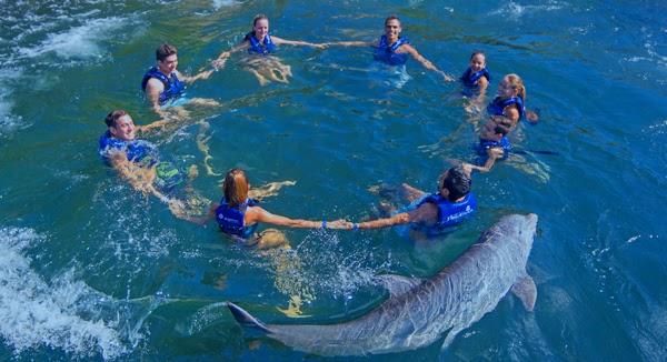 Actividades en Quintana Roo con delfines