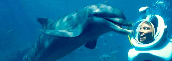sea-trek-nado-con-delfines-en-cancun