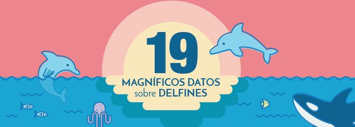 nado-con-delfines-en-Cancun-infografia
