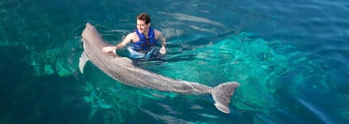 nado-con-delfines-bueno.png
