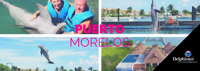 Delphinus-Puerto-Morelos.png