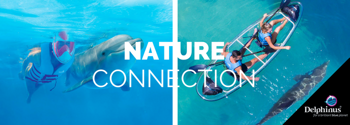 delphinus-Nature-connection