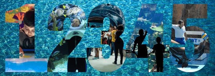 Delphinus 5 acuarios nado con delfines Cancún