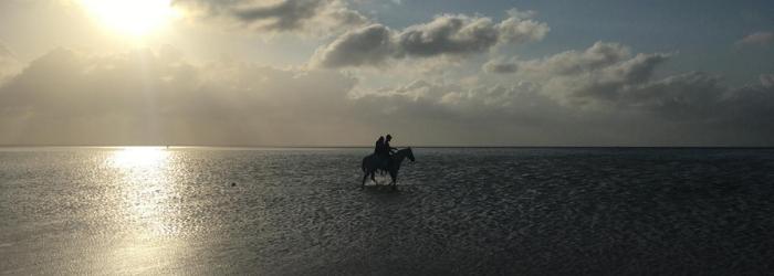 Delphinus playas publicas perfectas Cancun