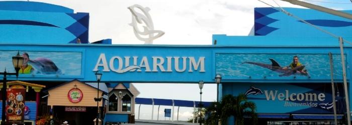 La_isla_Cancun_nado_con_delfines_-_Delphinus.png